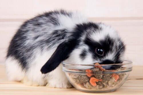 yemek yiyen tavşan