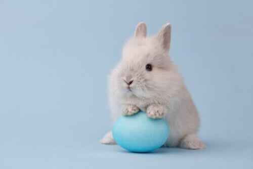 mavi yumurta ve küçük tavşan