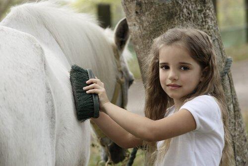 Atların Günlük Bakımı ile İlgili Her Şey