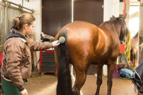 atın tüylerini tarayan kadın