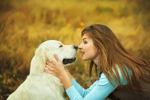 Köpekler Kelimeleri ve Komutları Nasıl Algılar?