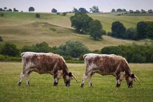 Hayvan Klonlama: Avantajları ve Dezavantajları