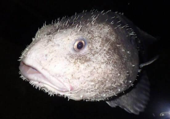 çirkin balık