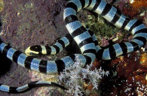 Deniz Yılanı: Zehirli ve Paradoksal