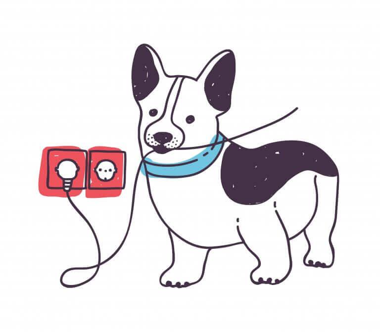 kablo ısıran köpek