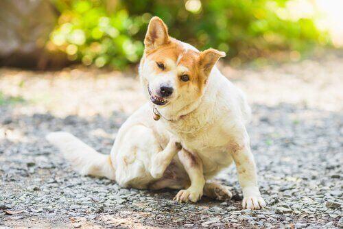 Köpeklerde ve Kedilerdeki Parazitler Nasıl Önlenir?