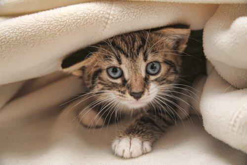 Kedinizi Eğitmek İçin Öneriler