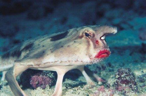 kırmızı dudaklı balık uzaklara bakıyor