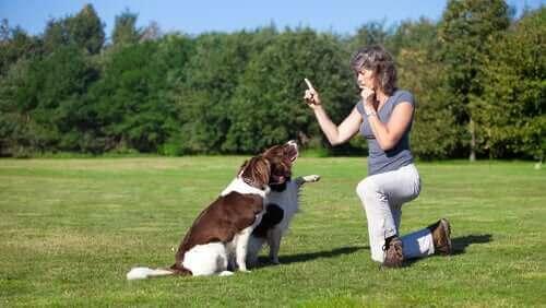 köpeklerine parkta eğitim veren kadın