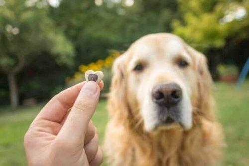 ödül alan köpek ve köpek eğitimi