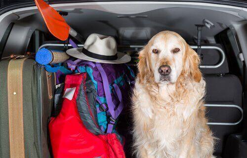 Köpekler için Araç Koltuk Kılıfları