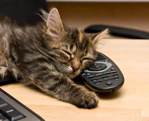 kediler enerjileri algılar