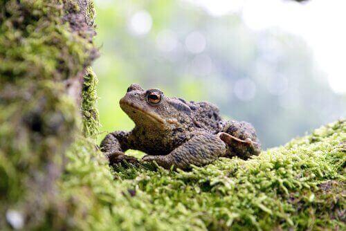 parktaki kurbağalar