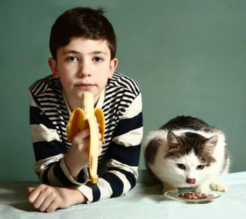 Kedi Beslenmesi: Kedilerin Yiyebileceği Meyveler