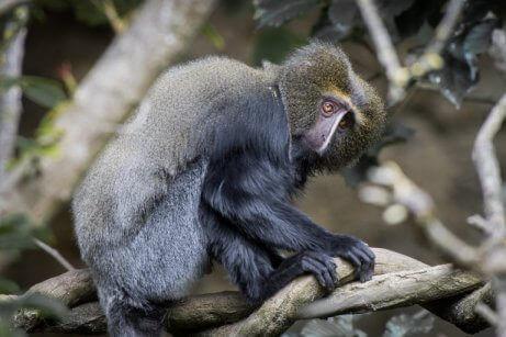 ağaçtaki maymun