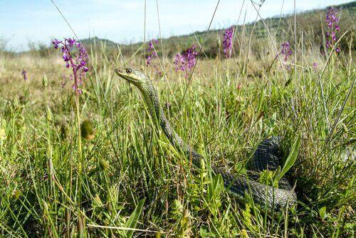donana ulusal parkındaki sürüngenler