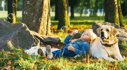 Seveceğiniz 5 Sakin Köpek Irkı