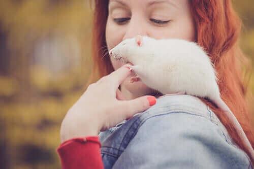sahibinin omzuna çıkan sıçan