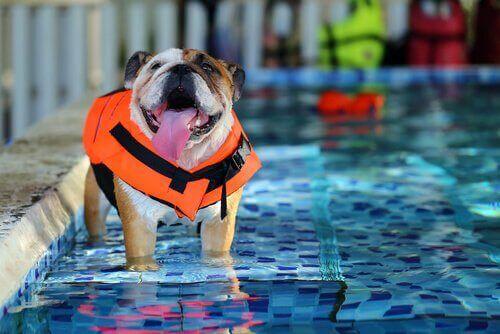 İspanya'da Köpekler için Spa Tesisleri