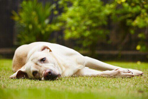 stres yaşayan köpek