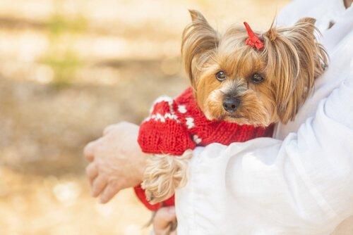 kırmızı kazaklı köpek ve kozmetik deneyler