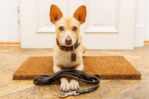 Köpek Eğitimi Ve Yapılan En Yaygın 7 Hata