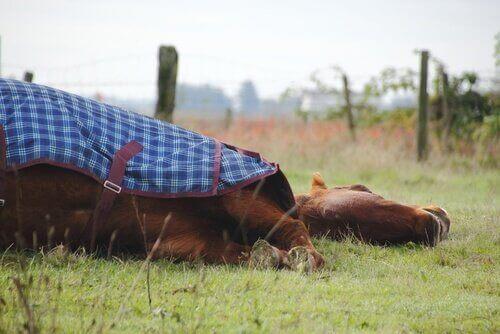 Atlar Ayakta mı Yatarak mı Uyur?