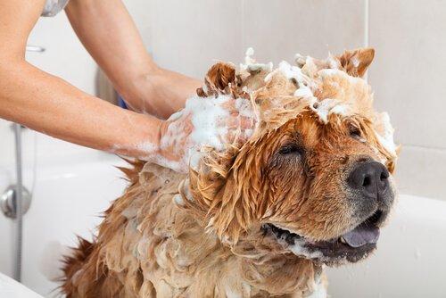 Kozmetik Deneyler Ve Köpek Kozmetiği