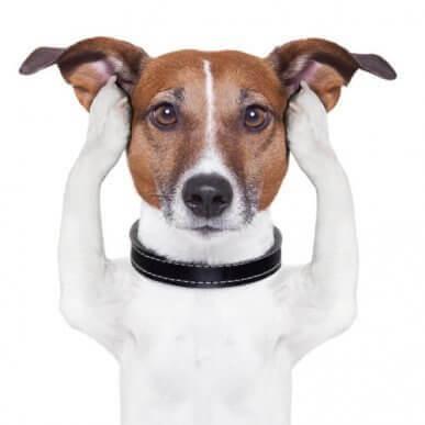 Sağır Köpeklerde Altıncı His