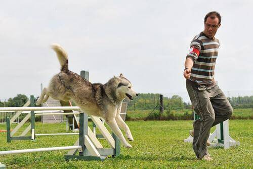 köpeğine agility eğitimi veren adam
