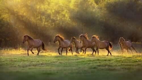 koşan kahverengi at sürüsü ve atlar ve insanlar