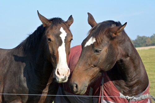 yan yana duran iki at