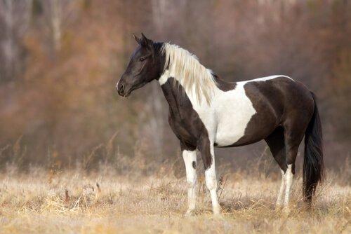 çalıların üzerinde duran beyaz kahverengi at
