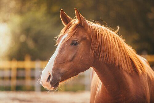 Atlarda Stres ve Nasıl Yardımcı Olabilirsiniz