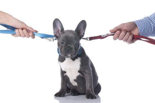 Ayrılık veya Boşanma: Köpeğime Ne Olacak?