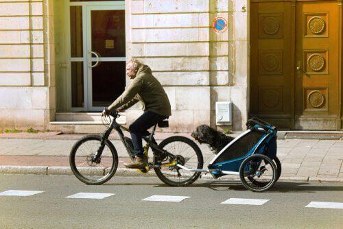 bisikletli araba ile köpeğini gezdiren adam