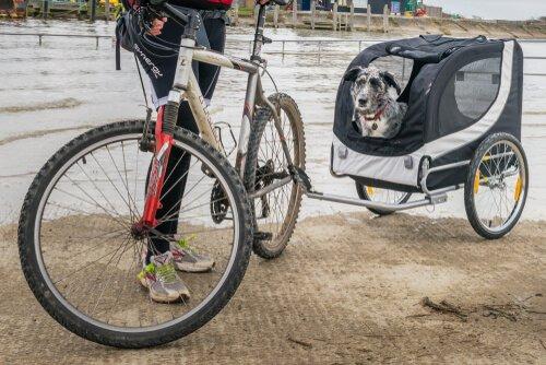 Bisikletli Arabalar ile Köpeğinizi Gezdirebilirsiniz