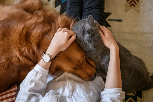 Evcil Hayvanınıza Sevgi Göstermenin Yolları