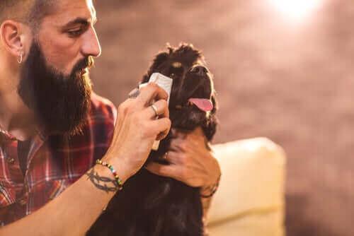 Köpeğinizin Gözlerini Temizlemek için İpuçları