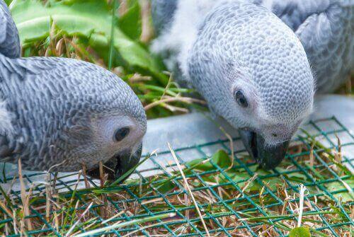 beslenen papağanlar