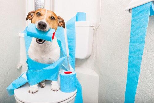 Hijyen Alışkanlıkları: Köpeğiniz için Eğitim