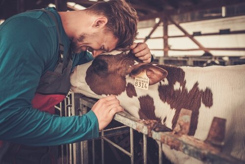 Çiftlikler İçin Farmakolojik Ürünler