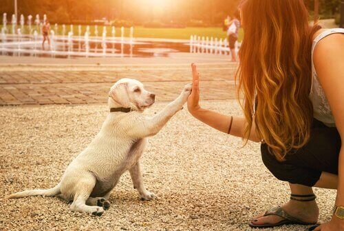 köpeklerde mutluluk
