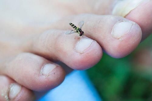 böceklerden bulaşan hastalıklar ve kara sinekler