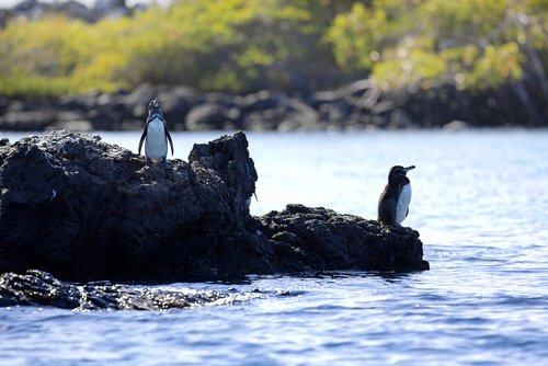 kayaların üstünde penguenler