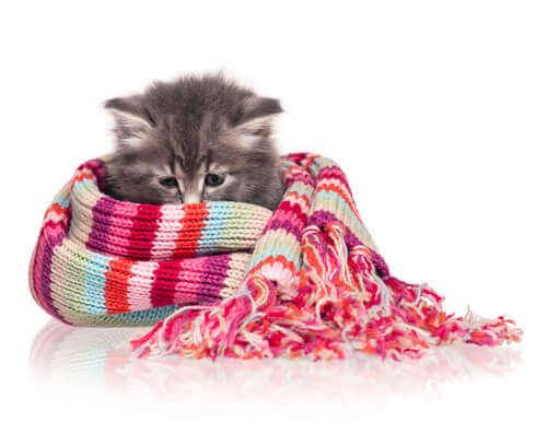 üşüyen kedi