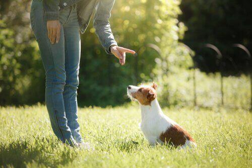 Köpeğinizi Eğitmek Bağınızı Nasıl Güçlendirir?