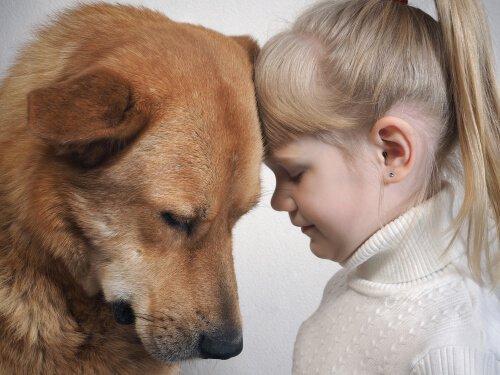 Köpekler İnsanların Yüz İfadelerini Anlayabilir mi?