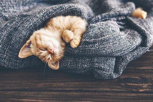Sıcaklık Değişimleri Kedinizi Etkiliyor