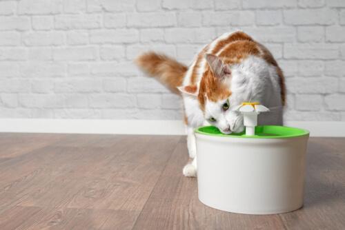 kedi su pınarları türleri